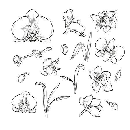 Vector hand drawn elegant orchid Stock Illustratie