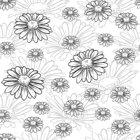Chamomile  pattern of flowers and leaves