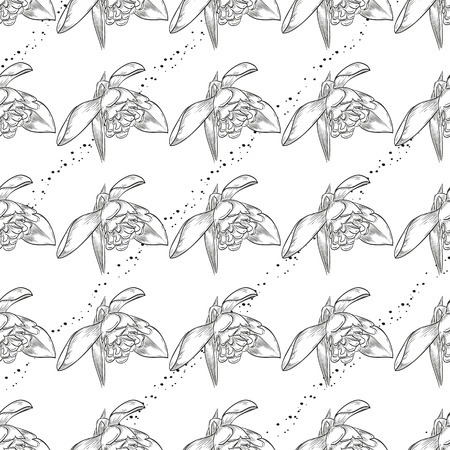 Vector hand drawn snowdrop seamless pattern of flowers and leaves isolated on white background Illustration