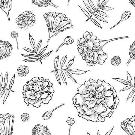 Vector marigold seamless pattern of flowers and leaves, hand drawn set