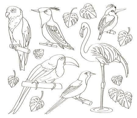 Exotic set birds