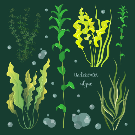 Vector set of underwater green sea seaweeds, algae. Vector illustration, EPS 10 Illustration