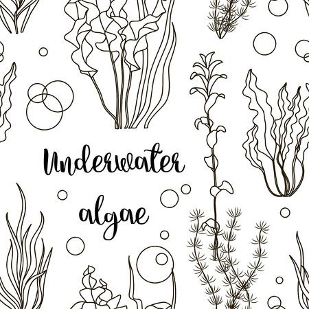 Vector set of underwater green sea seaweeds, algae pattern. Vector illustration, EPS 10