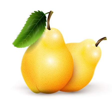 Two yellow pears isolated on white background. Vector illustration, EPS 10