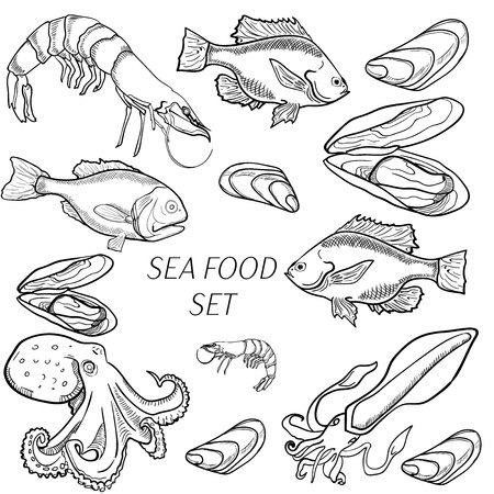 Set of sea food products. Realistic illustration of a sketch, suitable for restaurants and menus. Vector set of hand drawing