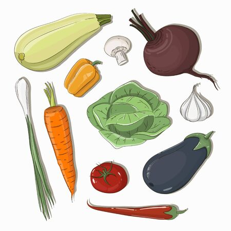 Mixed vegetable vector illustration. Carrot, onion, potato and other fresh vegetables. Natural food. Stock fotó - 146453594
