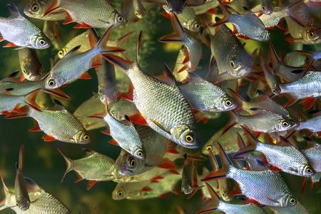 fish tank: Fish swimming in a tank