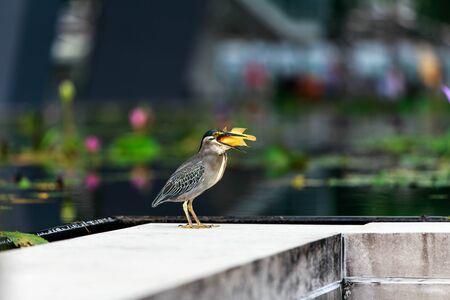 decoy: Little bird eat little fish