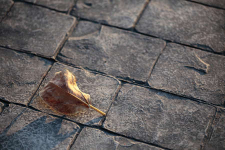 dry leaf: Dry leaf on rock ground Stock Photo