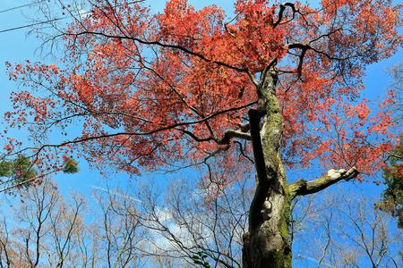Autumn leaves on sunshine background