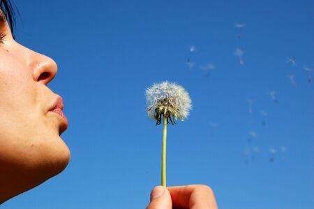 bloweing dandelion Standard-Bild