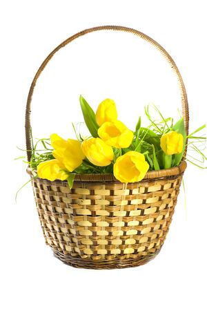 Basket with yellow tulips on white background