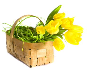 Yellow tulips in the basket over the white background Stock Photo