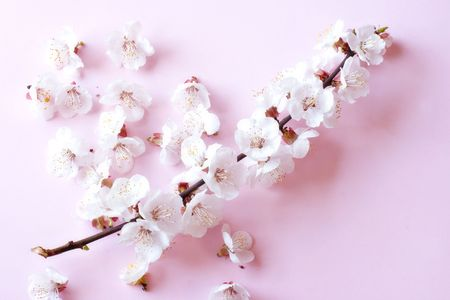 Cherry tree flowers in soft focus Stock Photo