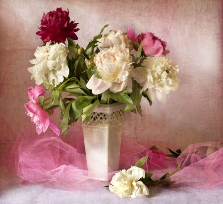 Beautiful peonies Stock Photo - 4995760
