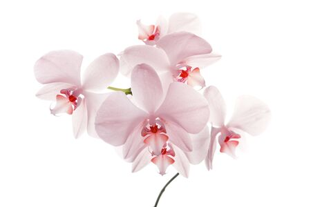 Tender orchids over the white background