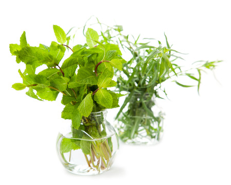 Fresh herbs over the white background  photo