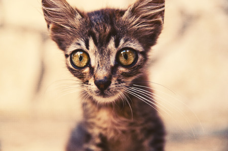 Cat with big eyes Stock Photo
