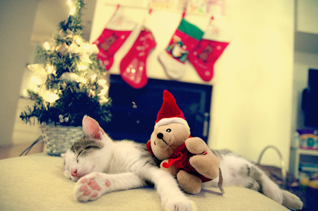 pampered pets: little Santa kitten Christmas with tree and Toy, Christmas background and fireplace.