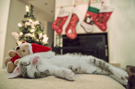 Merry Christmas cat. Kitten under tree. Kitten sleeping on his back wit Santa toy. Christmas background and fireplace. Stockfoto