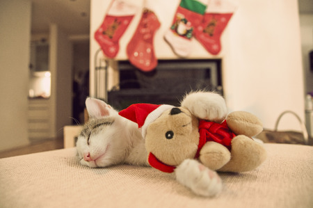 Kitten sleeping with his Christmas toy. Baby cat. Christmas tree.