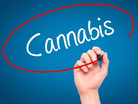 bob: Man Hand writing Cannabis with black marker on visual screen. Isolated on blue. Business, technology, internet concept. Stock Photo Stock Photo