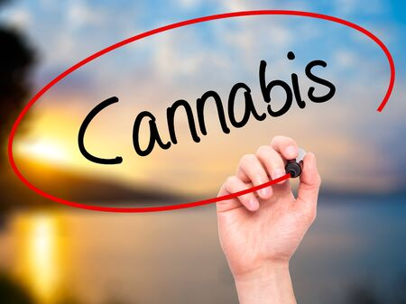 bob: Man Hand writing Cannabis with black marker on visual screen. Isolated on nature. Business, technology, internet concept. Stock Photo