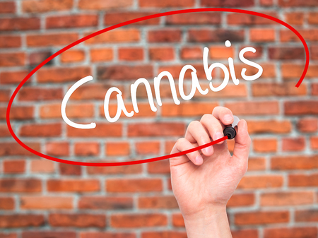 bob: Man Hand writing Cannabis with black marker on visual screen. Isolated on bricks. Business, technology, internet concept. Stock Photo Stock Photo