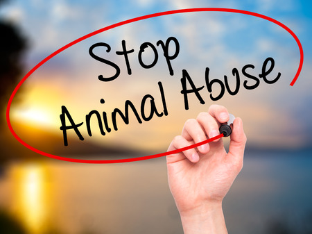 pathetic: Man Hand writing Stop Animal Abuse with black marker on visual screen. Isolated on background. Business,  technology, internet concept. Stock Photo