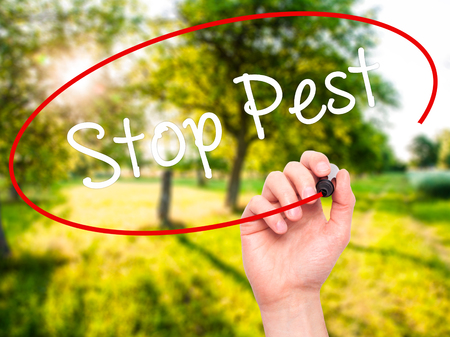 Man Hand writing Stop Pest with black marker on visual screen. Isolated on background. Business, technology, internet concept. Stock Photo