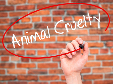 cruelty: Man Hand writing Animal Cruelty with black marker on visual screen. Isolated on background. Business, technology, internet concept. Stock Photo Stock Photo