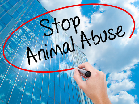 maltreatment: Man Hand writing Stop Animal Abuse with black marker on visual screen.  Business,  technology, internet concept. Modern business skyscrapers background. Stock Photo Stock Photo