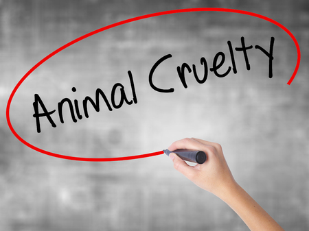 animal cruelty: Woman Hand Writing Animal Cruelty with black marker over transparent board. Isolated on grey. Business concept. Stock Photo