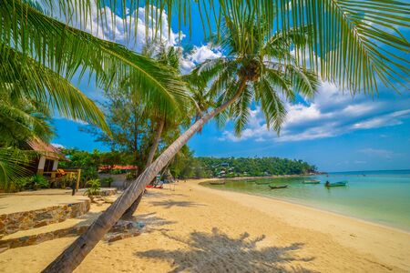 Paradise Sunny beach with palms and turquoise sea. Summer vacation and tropical beach concept. Standard-Bild
