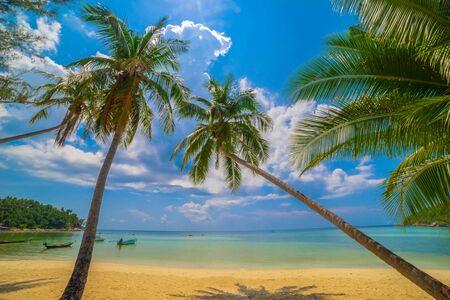 Beautiful tropical island beach, summer nature scene beach, blue sky and palm trees - Koh Phangan Thailand