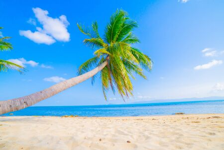 Beautiful beach. View of nice tropical beach with palms around. Holiday and vacation concept. Tropical beach. Reklamní fotografie