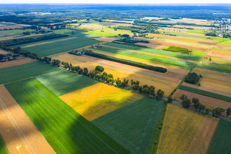 Aerial photo from flying drone of a beautiful nature landscape with growing healthy. Beauty scenery with farm.