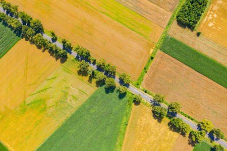 Green fields aerial view before harvest at summer. Road aerial