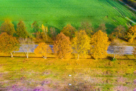Aerial view of road in beautiful autumn forest at sunset in rural. Beautiful landscape with rural road and trees with colorful leaves.