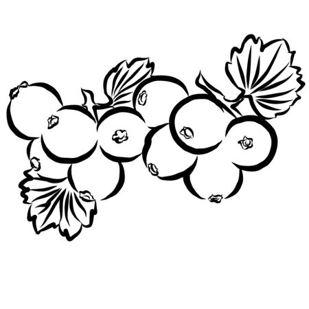 cowberry: Cowberry Sketched Outline Vector Illustration Hand drawn Artwork