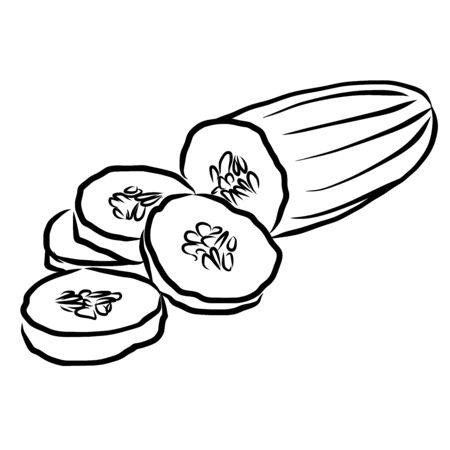 cuke: Cuke Sketch Vegetables Outline Vector Artwork, Hand drawn image Illustration