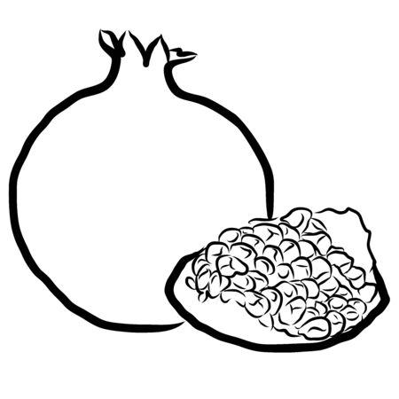 sketched: Pomegranate Sketched Outline Vector Illustration Hand drawn Artwork