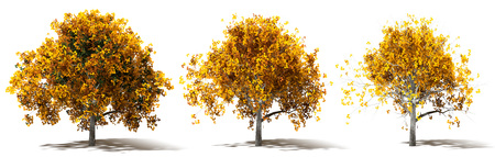 Three Autumn Marple Trees Renderings, Various ammount and color of Leaves, 3d Design