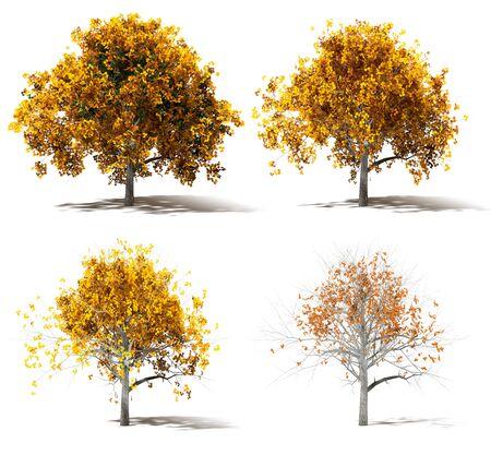 Four Autumn Marple Trees Color change, 3d Rendering, Low Poly Design