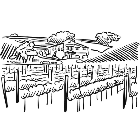 californian: Californian Vineyard with Hills and House, Vector Sketched Artwork Illustration