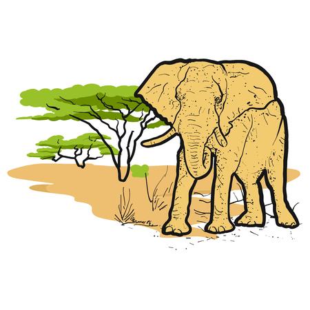 Elephant in savannah Colored Illustration, Hand-drawn Vector Outline Sketch Illustration