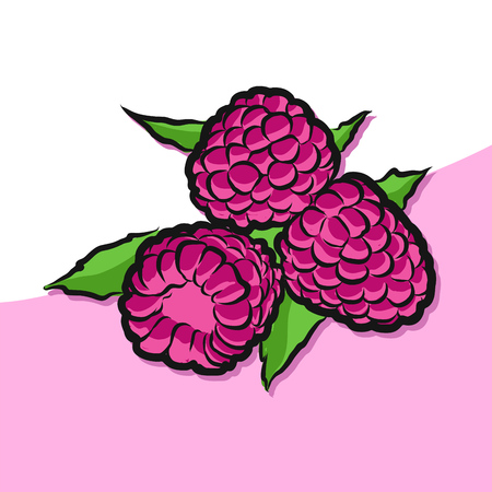 Colored Raspberries Vector Artwork, Fresh Food Collection, Handdrawn Clean Outline Sketch
