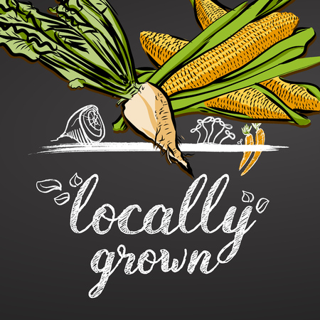Locally Grown Vegetables Banner, hand drawn food doodles and colored vegetables. Ready for printing, e.g. Flyers, menu cards as well as online marketing campaigns. Stok Fotoğraf - 78205637