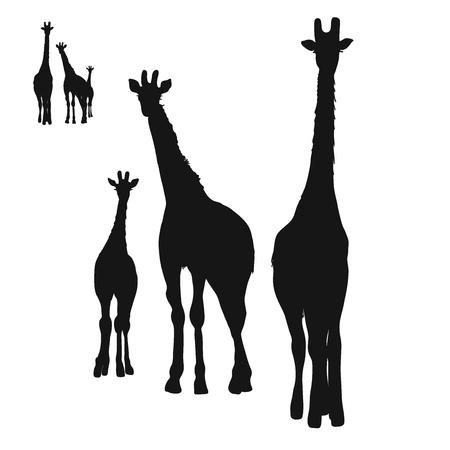 Three Giraffes Silhouettes, Digital Wall Art, Vector Drawing.