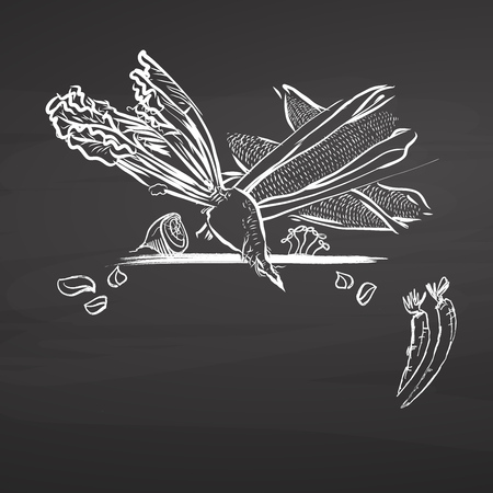 Sugar beet and corn drawing on chalkboard. Hand drawn healthy food sketch. Black and White Vector Drawing on Blackboard. Stock fotó - 87405605